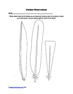 Ask A Biologist, Coloring Page, Feather Type & Anatomy