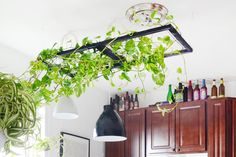 Two Savvy Solutions for Ugly Rental Kitchen Lights