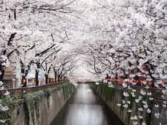 Ask anyone who has visited, and they'll tell you: Japan is easily one of the most stunning places in the world.