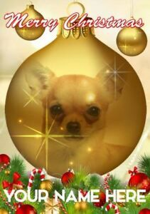 New Puppy For Christmas 2020 December 23+ Merry Christmas Chihuahua Images in 2020 | Chihuahua funny