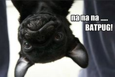Funny Pug Dog Meme Pun LOL Love pugs? Follow me @divinewanderer2 #pugs #dogs #pets