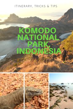Komodo National Park- Itinerary, Tips & Tricks @ Indonesia