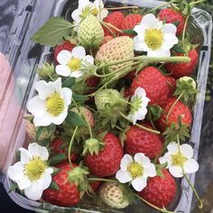 Image about aesthetic in Fruits ! Strawberry Fields, Strawberry Shortcake, All I Ever Wanted, Aesthetic Food, Vaporwave, In This World, Summertime, Picnic, Cottage