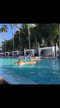 Pool and Palm