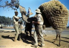 A view as a local tribesmen leads his camel past the U.S Air Force base in Benghazi, Libya.