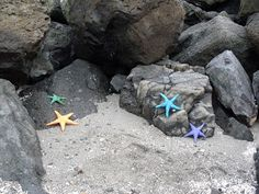 My sea stars at Golden Gardens