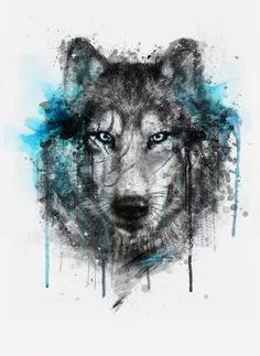 prints on metal Animals wolf splash watercolors digital illustration winter black blue