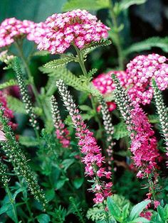 """10 Top Summer Plant Pairs 