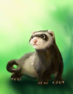 Cute ferret by *nienor on deviantART