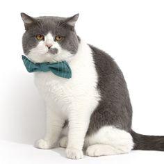 Collares pajarita (corbatin) para mascotas