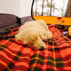 Adorable puppy snuggling on top of a plaid blanket. Follow @ourcamplife on Instagram