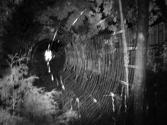 A very nice spider web. Spider, Night, Painting, Art, Spiders, Painting Art, Paintings, Kunst, Paint