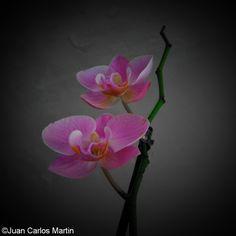 Fantasía floral...