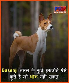Funny Facts Mind Blowing In Hindi Trendy Ideas