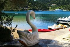 The swan on Mongonisi beach, Paxos Island Paxos Island, Greek Islands, Swan, Beach, Greek Isles, Swans, Seaside, Greece Islands