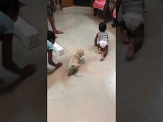 Baby enjoying with puppy dog  #puppy #baby