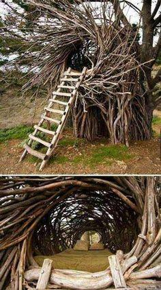 sleep in a real bird's nest
