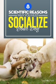 8 Scientific Reasons Why You Must Socialize Your Dog (and how it helps) Dog Training Classes, Dog Training Tips, Can Dogs Eat Blueberries, Vet Tech Student, House Breaking Dogs, Socializing Dogs, Dog Food Online, Dog Health Care, Health Tips