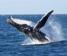 Top 5 wildlife experiences in Australia courtesy of @audleytravel http://bit.ly/1XUj8j6