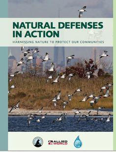 Defensas naturales en acción: El uso de la naturaleza para proteger nuestras comunidades | Mercados de Medio Ambiente