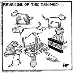 #wednesdaywags #adoptdontshop #goldenretriever Cute Funny Animals, Funny Dogs, Dog Comics, Cartoon Dog, Dog Cartoons, Dog Memes, Dog Funnies, Animal Funnies, Dog Agility