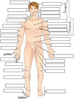 Click On Image Body Labeling Tool Anatomy And Physiology