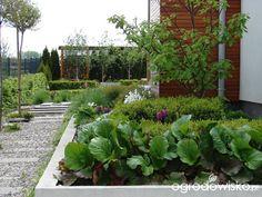 Małymi krokami bo własnymi ręcami... :* - strona 1740 - Forum ogrodnicze - Ogrodowisko