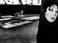 Mario Giacomelli : 'My Whole Life' Series (Photography)