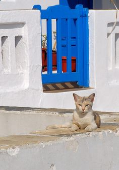 Cats in Greece #1: Mykonos. Corfu travel guide by Corfu2travel.com