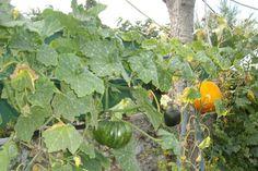 10 astuces pour augmenter vos récoltes dans votre jardin en permaculture : http://www.permaculturedesign.fr/10-astuces-pour-augmenter-vos-rcoltes/