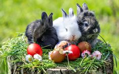 Spring Wallpapers and Backgrounds - Spring Images and Pictures Church Pictures, Garden Pictures, Flower Pictures, Thanksgiving Wallpaper, Christmas Wallpaper, Obama Images, Animal Categories, Happy Easter Bunny, Spring Images
