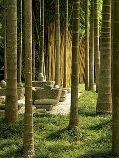 """Thailand - The gardens, which he designed with Jirachai Rengthong, include a """"room"""" with stone mortars and pestles among betel nut palms and yellow bamboo. Architecture, Interior and Landscape Design by Bensley Design Studios Bamboo Landscape, Bamboo Garden, Bamboo Plants, Landscape Design, Garden Design, Bamboo Art, Abstract Landscape, Tropical Landscaping, Tropical Plants"""