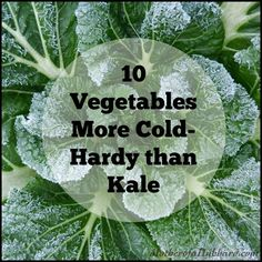 vegetables more hardy than kale