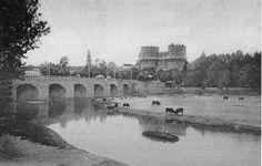 Toros pastando (puente de Serranos)