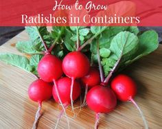 How to Grow Radishes in Containers. Super easy & mature in as little as three weeks!