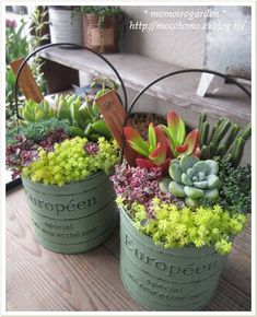 buckets of succulents, cute planter idea. Please also visit www.JustForYouPropheticArt.com for colorful, inspirational Prophetic art painting, prints and stories and like my Facebook Art Page at www.facebook.com/Propheticartjustforyou Thank you so much! Blessings!