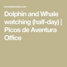 Dolphin and Whale watching (half-day)   Picos de Aventura Office