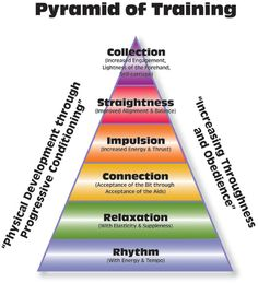 The dressage pyramid  ( I think this would apply to some western riding too!)