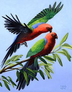 Beautiful Red Roses, Beautiful Moon, Beautiful Birds, Animals Beautiful, Pretty Birds, Love Birds, Parrot Flying, Sounds Of Birds, Scratchboard Art