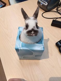 Bunny in a box ; so much better than Jack in a box