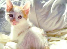 Just a Kitten Enjoying the Sunshine