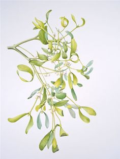 Mistletoe, by Valerie Beacham