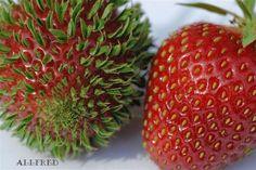 Seeding strawberry