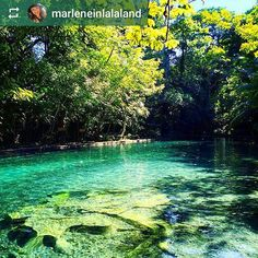 Follow @marleneinlalaland: Ojo de Agua a natural spring pool filled with crystal clear water from an underground river that comes Maderas #Volcano. #Omepete #Island #Nicaragua #ILoveGranada #AmoGranada #Travel