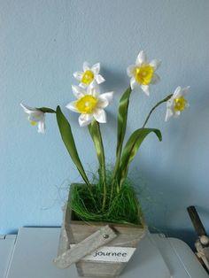 Narcis zo satenovej stuhy