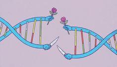 Are Genes Selfish or Cooperative? | Quanta Magazine