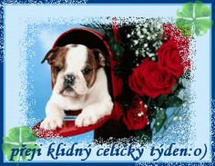 Very interesting post: English Bulldog Puppies - 45 Pictures.сom lot of interesting things on Funny Dog. Cute Puppies, Cute Dogs, Dogs And Puppies, Beagle Puppies, Puppy Pictures, Cute Pictures, Bulldog Wallpaper, Puppies Wallpaper, Cute Bulldogs