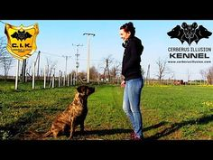 Mma, Cerberus, Training Your Dog, Illusions, Dog Lovers, Puppies, Pets, Video Channel, Beautiful
