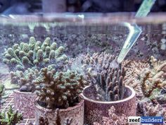 How to feed a coral reef tank. Recipie for mixing your own coral food and feeding your reef aquarium - Reef Builders | The Reef and Marine Aquarium Blog