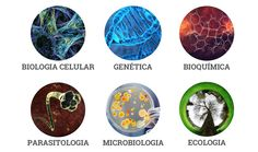 kit-de-estudos-biologia-700px